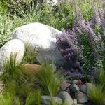 Whispy grasses soften, rounded boulders and the Mediterranean plant material suggest a stream's edge.