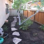 "Here a pleasant ""natural"" flagstone path provides access to the fig tree for its annual harvest but as importantly, provides a focal point for the rear yard eye view. Plant material is surrounded by a thick natural mulch to lower water demand and provide relief from weed growth."